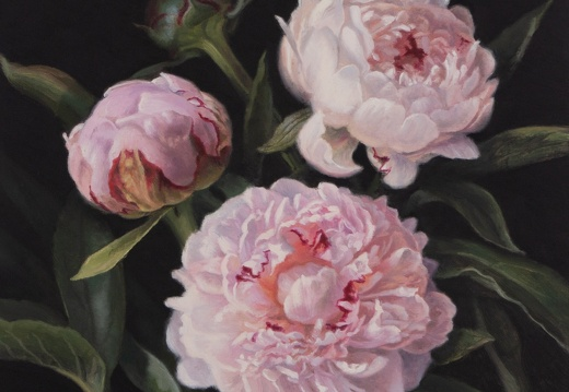 Three Pink Peonies